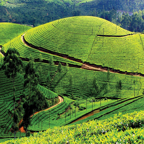 15 Best Images About Kerala Tourism: 9 Popular Tourist Places To Visit In Kerala Slide 2