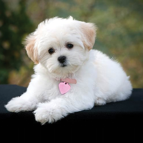 Here`s the pet friend according to your zodiac, here the pet friend according to your zodiac,  which pet animal is compatible with your zodiac sign,  choose the best pets for your horoscope sign,  pet zodiac signs,  the zodiac and its pets,  astrology,  ifairer