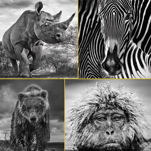 11 Photographs from the wild that will take your breath away