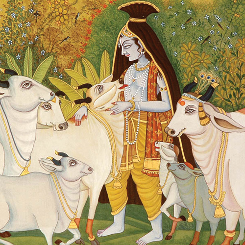 7 Secret behind why Hindus do not eat beef, secret behind why hindus do not eat beef,  why do hindus consider cow as holy,  cow in hinduism,  importance of cow in hinduism,  astrology,  spirituality,  ifairer