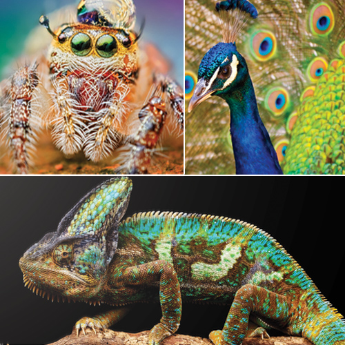 11 World`s most colorful animals revealed and it sure is mesmerizing, world most colorful animals revealed,  most colorful animals of the world,  colorful animals,  travel,  ifairer