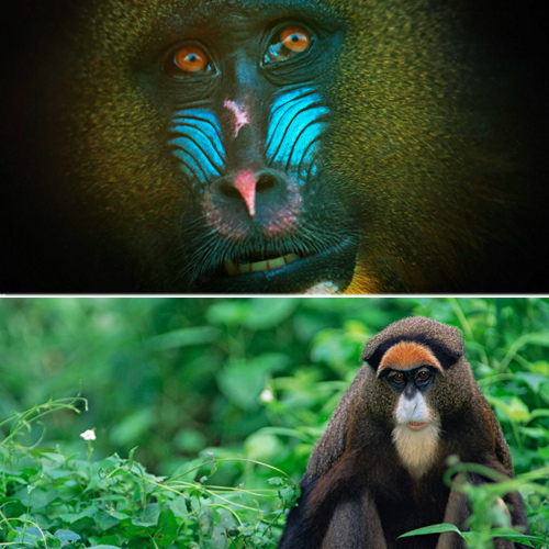 World`s most colorful animals revealed and it sure is mesmerizing, world most colorful animals revealed,  most colorful animals of the world,  colorful animals,  travel,  ifairer