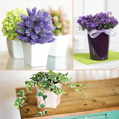 Beautiful houseplants that need very less care slide 1 for Less maintenance plants