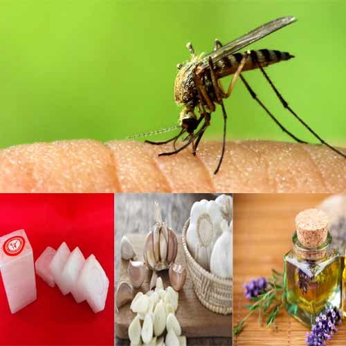 5 Natural Ways To Keep Mosquitoes Away From Home Slide 1
