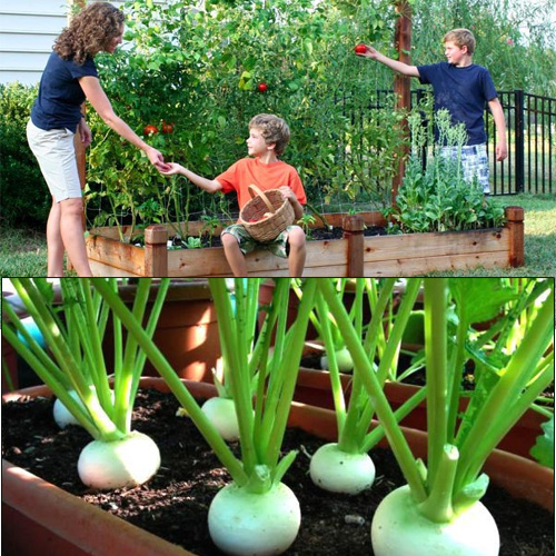 Easiest Foods To Grow In Kitchen