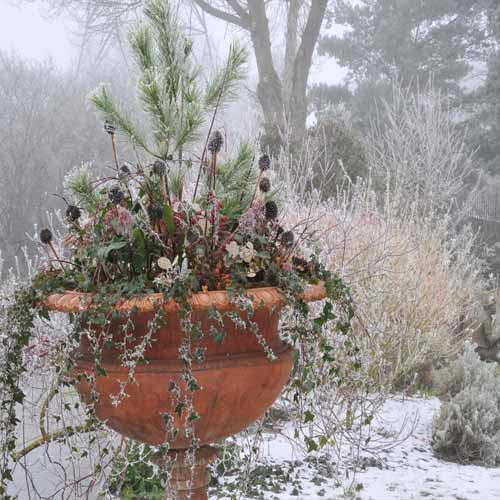 Tips to protect plants in Winters, tips to protect plants in winters,  how to protect plants in winters,  winter tips for plants,  how to provide safety to plants,  ifairer