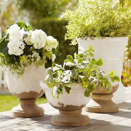 Points to consider while buying Planters, points to consider while buying planters,  how to buy planters,  how to buy pots for garden,  how to buy containers for plants,  ifairer
