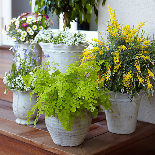 5 Tips to protect potted plants in winter