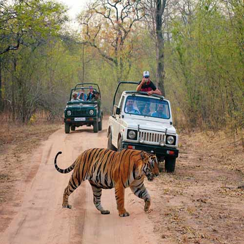5 Best Wildlife Sanctuaries in India, 5 best wildlife sanctuaries in india,  which are the best wildlife sanctuaries in india,  tourist places in india,  know about the 5 best wildlife sanctuaries in india,  ifairer