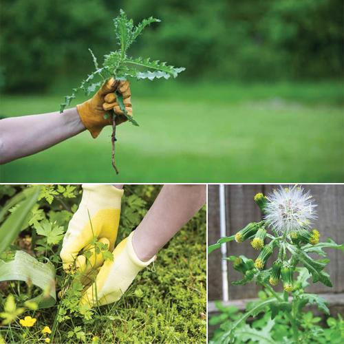 Easiest Way To Get Rid Of Weeds In Your Garden Slide 1