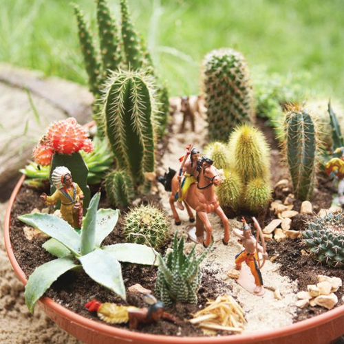 5 Easy steps to make a beautiful cactus container garden, easy steps to make a beautiful cactus container garden,  how to make a container into a desert landscape,  cactus container garden,  decor,  gardening,  ifairer