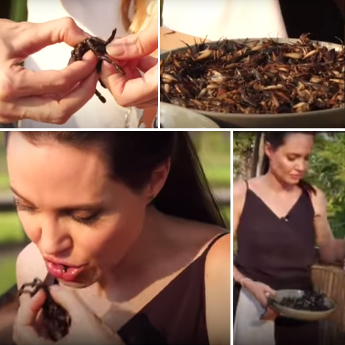 Watch video: Angelina Jolie eats tarantulas on TV