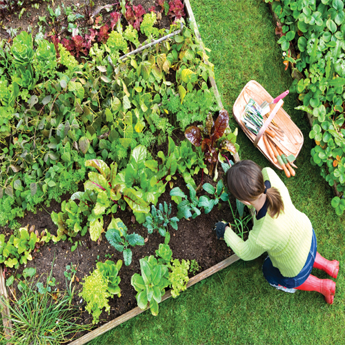 6 Things to take care while growing Vegetable Garden, things to take care while growing vegetable garden,  consider these things while growing vegetable garden,  gardening hacks,  gardening tips,  tips to grow vegetable garden,  ifairer