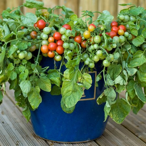Grow small Vegetable Garden at your home in containers