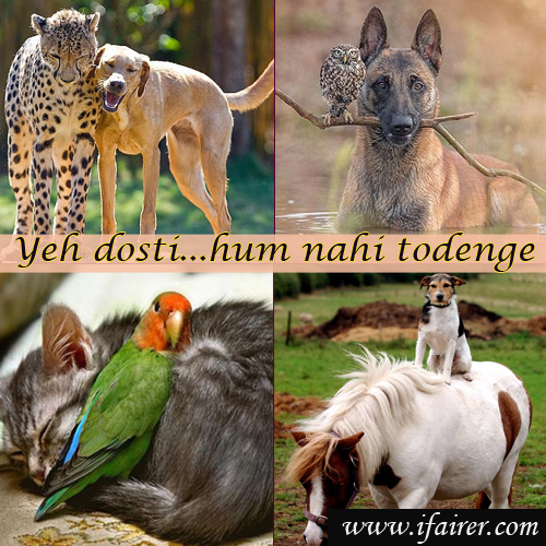 Animal kingdom: Yeh dosti...hum nahi todenge, friendships throughout the animal kingdom,  yeh dosti...hum nahi todenge,  heartwarming cases of unlikely friendships throughout the animal kingdom revealed,  friendships of animals,  amazing pictures,  general articles,  ifairer