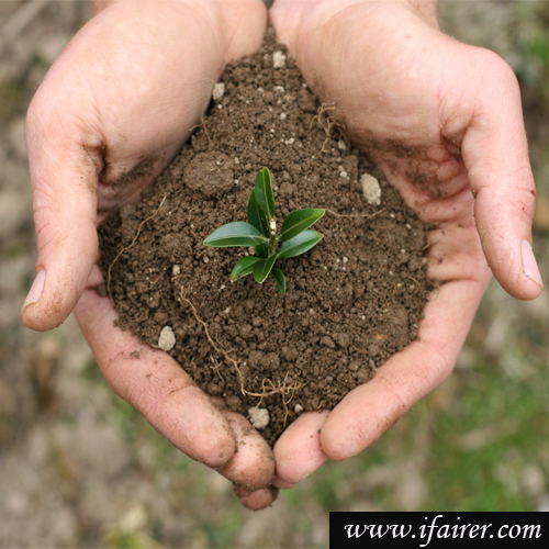 Gardening tips: Ways to check the fertility of Soil