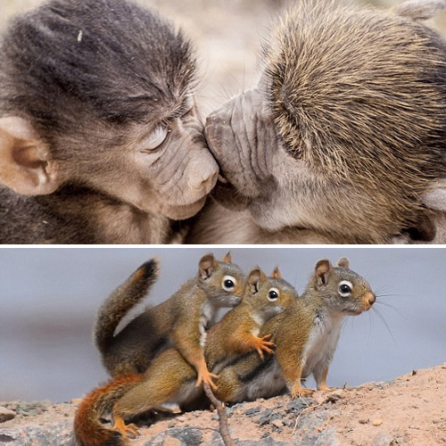 Hilarious photos: See the funnier side of nature  , hilarious photos see the funnier side of nature,  comedy wildlife awards capture the lighter side of nature,  photographers captures the funnier side of nature,  destinations,  travel,  ifairer