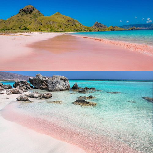 Miraculous pink beaches around the world, must visit