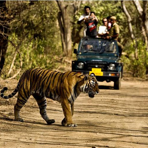 Places to visit in Khajuraho, must visit, places to visit in khajuraho,  must visit,  tourist attractions in khajuraho,  tourist places,  destinations,  travel,  ifairer