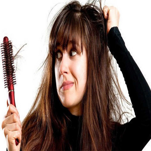 Say goodbye to hair loss forever , researchers develop new method, say goodbye to hair loss forever ,  researchers develop new method,  yokohama national university,  japan,  hair follicle germs (hfgs),  hair loss,  hair,  biomaterials,  oxygen-permeable dimethylpolysiloxane (pdms),  dermal papilla cells,  japanese researchers,  