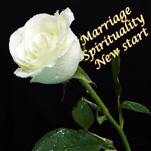 Give the right rose, Know your rose meanings , give the right rose,  know your rose meanings,  rose day,  color roses convey different meaning,  rose color meanings,  love & romance,  relationship tips,  ifairre
