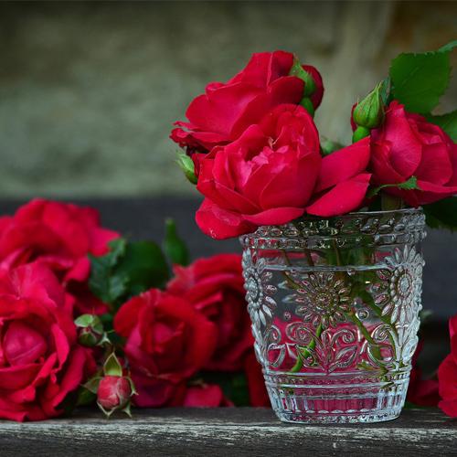 Gardening Tips: Grow a Beautiful Rose Garden, valentine day,  gardening tips to grow beautiful roses,  gardening tips,  how to grow a beautiful rose garden,  secrets to growing roses,  success with roses,  growing roses,  tips for planting roses,  how to start a rose garden,  decor,  gardening,  ifairer