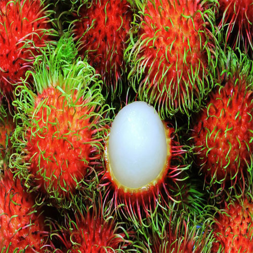 10 Exotic fruits you have probably never heard before, you should try once, exotic fruits you have probably never heard before,  you should try once,  exotic fruits,  awesomely fruits,  cuisines,  ifairer