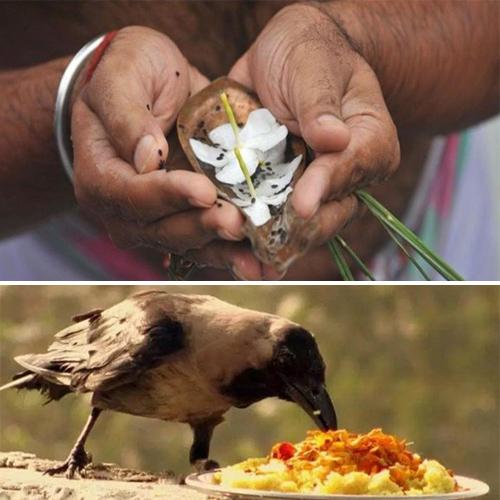 Pitru Paksha: The Do's and Don'ts to observe Shradh, pitru paksha,  the dos and donts to observe shradh,  things to do during shradh,  pitru paksha dos and donts,  about shradh and when to perform shradh,  shradh,  spirituality,  astrology,  ifairer