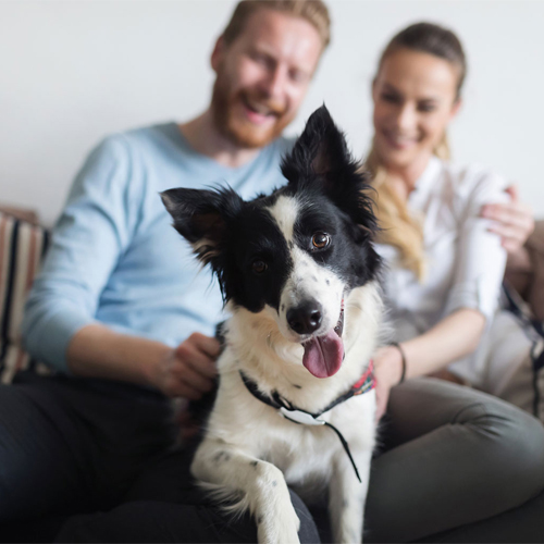 Study: Household pollutants cause infertility in both men and dogs, study,  household pollutants cause infertility in both men & dogs,  chemical pollutants in the home degrade fertility in both men and dogs,  study finds,  home chemical pollutants harm fertility in both men and dogs,  household pollutants,   infertility,  men,  dogs,  ifairer