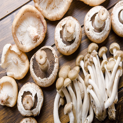Study: Eating mushrooms twice a week reduce the risk of memory loss  , study,  eating mushrooms twice a week reduce the risk of memory loss,  eating mushrooms,  memory loss. new research,  health care,  new study,  ifairer
