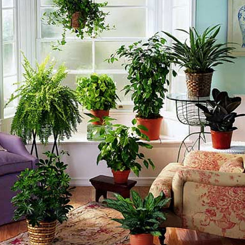 Best Indoor Plants That Are Easy To Maintain, best indoor plants that are easy to maintain,  decorate home with plants,  how to decorate with houseplants,  indoor plants for home decor,  best indoor plants & how to take care of them,  gardening,  ifairer