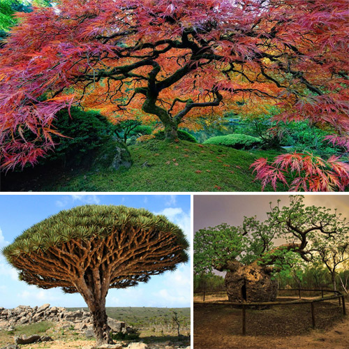 World's most unusual and unique trees that really exist, world most unusual and unique trees that really exist,  amazing images of the most extraordinary trees in the world,  the world most amazing trees,  destinations,  travel,  places,  destination,  ifairer
