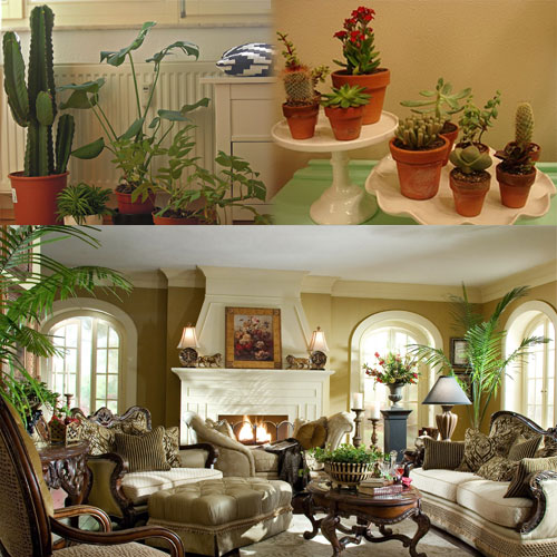 Decorate Your Interior with Green Indoor Plants , decorate your interior with green indoor plants,  interior your house with indoor green plants,  how to decorate with houseplants,  home decor,  decor tips,  ifairer