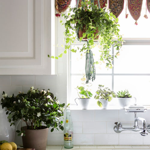 7 Ways to add plants to your kitchen, 7 ways to add plants to your kitchen,  tips for decorating your kitchen with plants,  decorating kitchen with plants,  indoor plants,  home decor,  decor tips,  ifairer