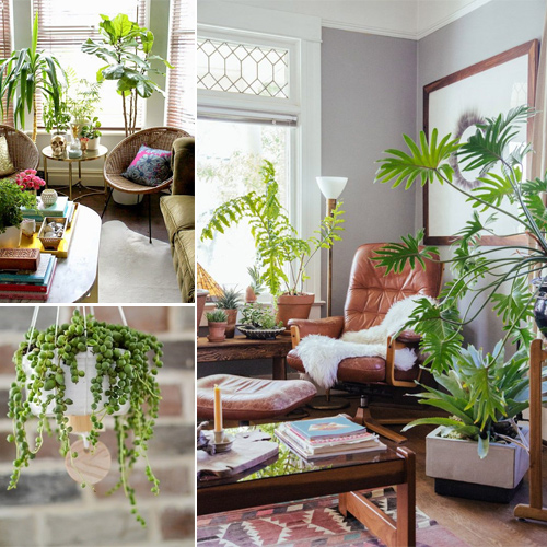 6 Tips to decorate your home with green plants
