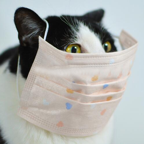 Study: Cats can catch coronavirus, prompting WHO investigation, study,  cats can catch coronavirus,  prompting who investigation,  who,  coronavirus,  coronavirus news,  coronavirus update,  ifairer