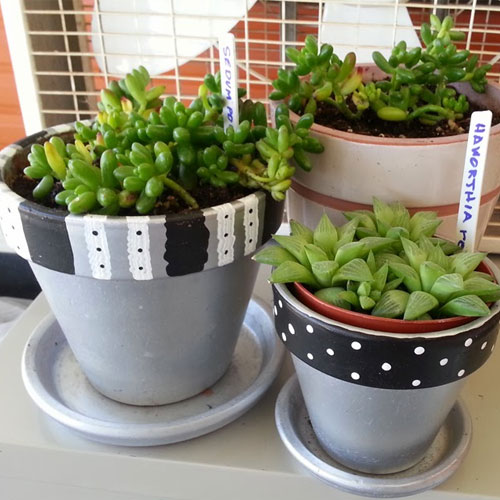 5 Winter Care Tips for Indoor Plants, 5 winter care tips for indoor plants,  winter care tips for pot plants,  how to protect potted plants in winter,  winter care for houseplants,  how to care for potted plants in winter,  gardening,  ifairer
