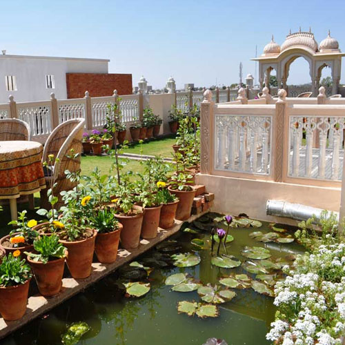 5 Ways to setup a terrace garden at home, 5 ways to setup a terrace garden at home,  tips to maintain a terrace garden,  how to maintain a terrace garden,  terrace garden maintenance tips,  gardening,  home decor,  ifairer