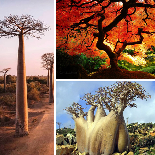 9 Most incredible and strangest trees in the world