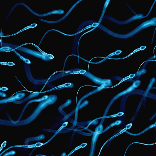 Study: Covid-19 could damage quality of sperm, reduce fertility in men , study,  covid-19 could damage quality of sperm,  reduce fertility in men,  covid-19,  sperm,  fertility,  research,  ifairer