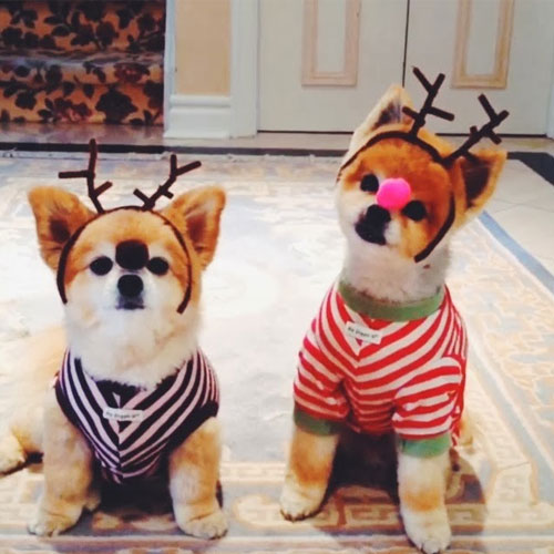 20 Pets Who are Chicer Than You, 20 pets who are chicer than you,  marni and cubby beckerman, cecil delevingne, trotter, menswear dog,  boo, asia,  choupette lagerfeld, digby van winkle,  neville and charlie jacobs,  barkley sir charles,  french toast,   grumpy cat, ginny,  dada, liger., bean,  the pointer brothers,  pudge,  nina,  miss zoe and mr. bailey,  pets are smarter than you,  pets which are smarter than you,  cute pets, chicker pets,  world famous pets,  pets which hold a pleasure in being smarter than men,  beautiful pets