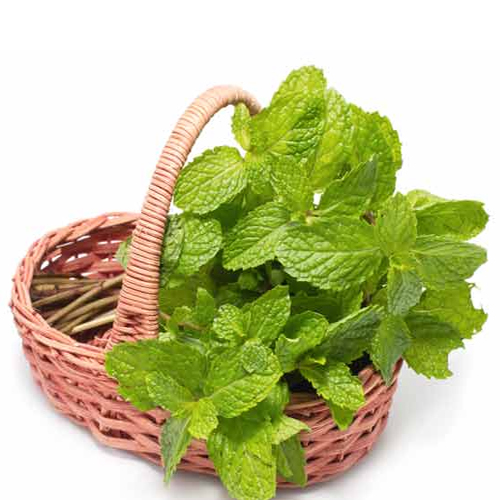 4 Benefits Of Eating Mint Leaves!, mint,  benefits of mint,  mint features,  mentha,  features of mint,  pudina,  ifairer