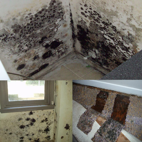 5 Steps To Minimize Mold In Your House Slide 1, Ifairer.com