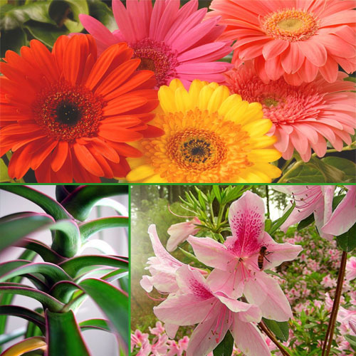 Air purifying plants for your house, air purifying plants for your house,  air purifying plants for your house,  plants that can purifying air in house,  air purifying plants,  gardening,  decor,  ifairer