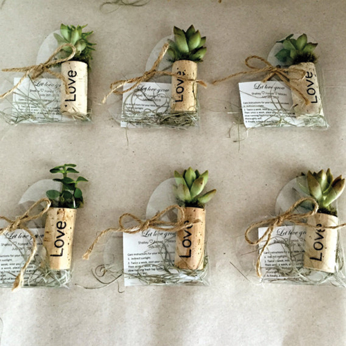 6 cool ways to style air plants slide 6 - Elegant ways to display air plants in your home ...