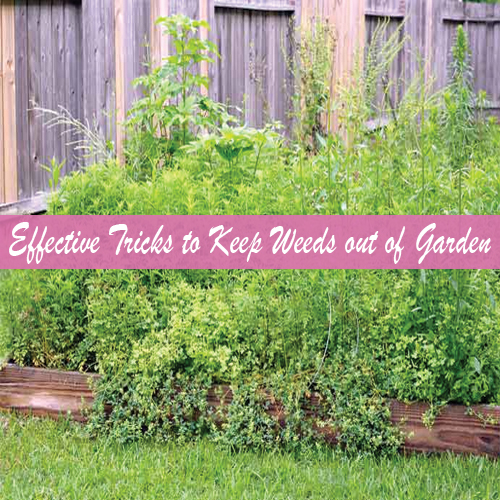 7 Effective Tricks to Keep Weeds out of Garden Slide 1, ifairer.com