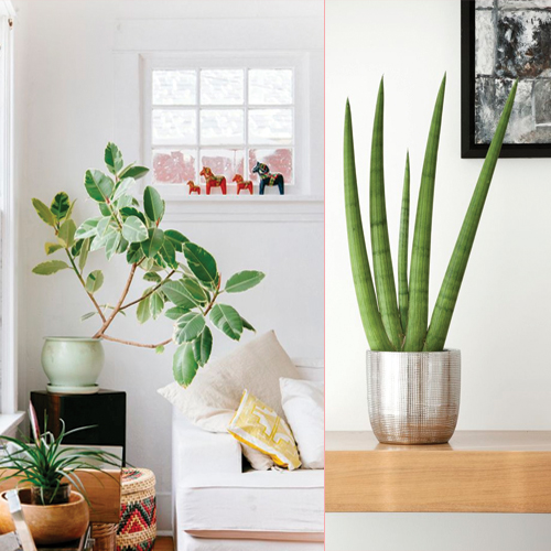 8 fuss-free indoor plants for eco friendly home Slide 1, ifairer.com
