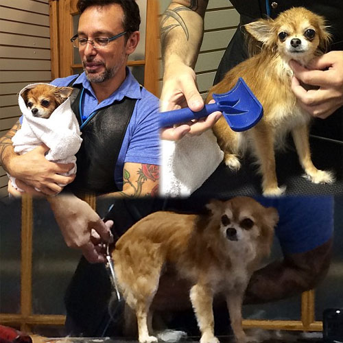 A Dog took haircut of $600, a dog took haircut of dollar 600,  