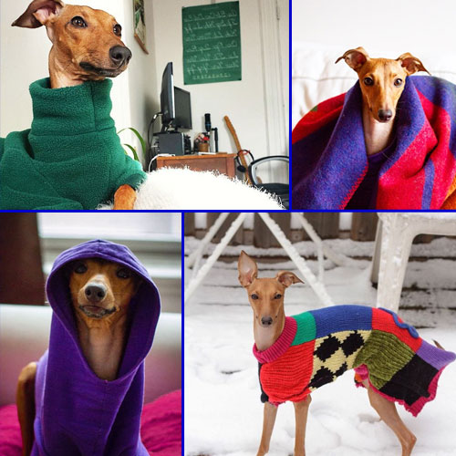 Adorable Fashion Advice for your Doggy, adorable fashion advice for your doggy,  fashion,  fashion tips,  fashion accessories,  fashion trends,  fashion trends 2015,  fashion for dog,  ifairer,  latest news
