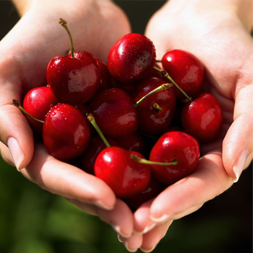 Amazing Reasons To Eat Cherries, amazing reasons to eat cherries,  cherries,  benefits of cherry,  health tips,  cherry a delicious food,  why should you eat cherry